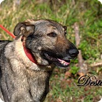 Adopt A Pet :: Destiny - Middleburg, FL