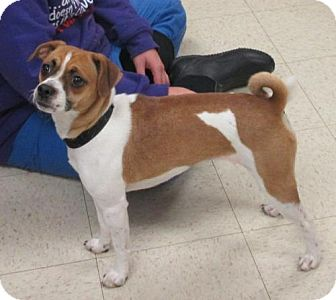 Jack Russell Terrier/Pug Mix Dog for adoption in Rootstown, Ohio - Penelope
