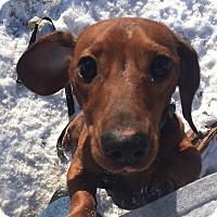 Adopt A Pet :: Tobias - Oak Ridge, NJ