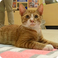 Adopt A Pet :: Triscuit - Mebane, NC