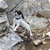 Adopt A Pet :: Lily Mae - Homewood, AL