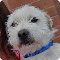 Adopt A Pet :: Stephen - Atlanta, GA