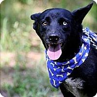 Adopt A Pet :: RUGER - Albany, NY