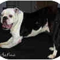 Adopt A Pet :: Harry - conyers, GA