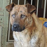 Adopt A Pet :: Taz - Brentwood, TN