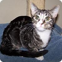Adopt A Pet :: K-DelMar3-Chickadee - Colorado Springs, CO