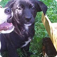 Adopt A Pet :: Coco - Warrenton, NC