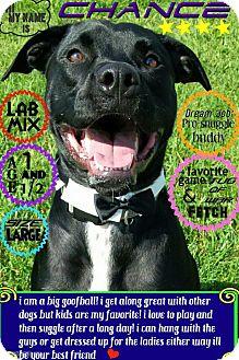 Labrador Retriever Mix Dog for adoption in Wichita, Kansas - Chance