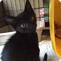 Adopt A Pet :: Jack - Simpsonville, SC