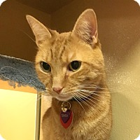 Adopt A Pet :: Simba - Fairfax, VA