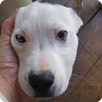 Adopt A Pet :: EMMETT - Lincolndale, NY