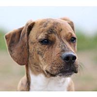 Adopt A Pet :: Skyler - Greensboro, NC