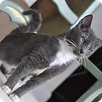 Adopt A Pet :: Marvin! SuperFriendly! (P.O) - New Smyrna Beach, FL