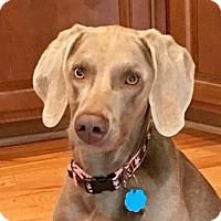 Adopt A Pet :: Reese - Birmingham, AL