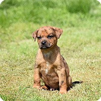 Adopt A Pet :: Mister - Groton, MA