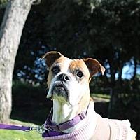 Adopt A Pet :: Dorothy - Alameda, CA