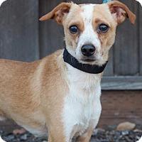 Adopt A Pet :: Fabio - Corona, CA