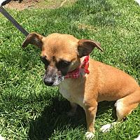 Adopt A Pet :: Penny - Vista, CA