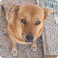 Adopt A Pet :: Gigi - Littlerock, CA