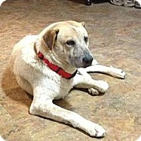 Adopt A Pet :: Peanut - Eustis, FL
