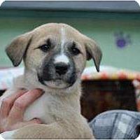 Adopt A Pet :: Alisa - New Boston, NH