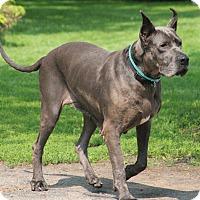 Adopt A Pet :: Ashley - Woodstock, IL