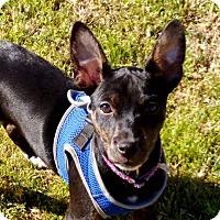 Adopt A Pet :: Myah - McLoud, OK
