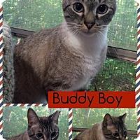 Adopt A Pet :: Buddy Boy - McDonough, GA