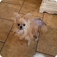 Adopt A Pet :: Luna - conroe, TX