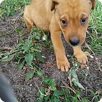 Adopt A Pet :: EENIE - Hollywood, FL