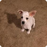 Adopt A Pet :: Bran - San Antonio, TX