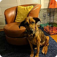 Adopt A Pet :: Lotus - Washington, DC