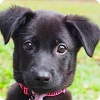 Adopt A Pet :: Reno - San Ramon, CA