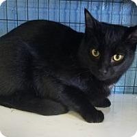 Adopt A Pet :: Licorcie 109133 - Joplin, MO