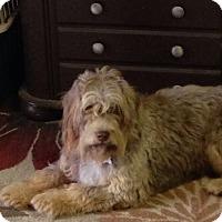 Adopt A Pet :: Dolly - Livingston, TX