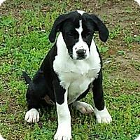 Adopt A Pet :: Rex - Franklin, TN