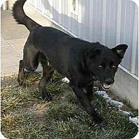 Adopt A Pet :: Huey - Meridian, ID