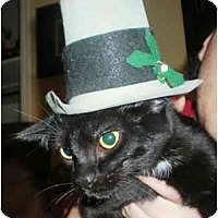 Adopt A Pet :: Sailor - Summerville, SC