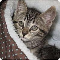 Adopt A Pet :: Waffle - Port Republic, MD