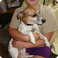 Adopt A Pet :: JACK (URGENT! - Leesport, PA
