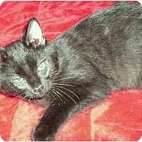 Adopt A Pet :: Champ - Greenville, SC