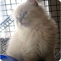 Adopt A Pet :: Champagne - Acme, PA