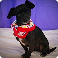 Adopt A Pet :: Selena - Princeton, KY