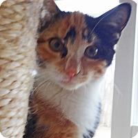 Adopt A Pet :: Annie - N. Billerica, MA