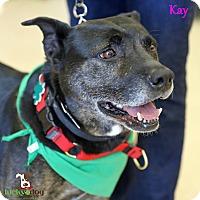 Adopt A Pet :: Kay - Alpharetta, GA