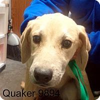 Adopt A Pet :: Quaker - Greencastle, NC