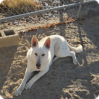 Adopt A Pet :: Marie - Victorville, CA