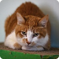 Adopt A Pet :: Tony - Chicago, IL