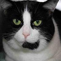 Adopt A Pet :: SCOUT - Hampton Bays, NY