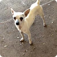 Adopt A Pet :: Alex - New Smyrna beach, FL